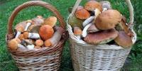Много грибов